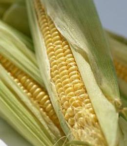 玉米含丰富的维生素