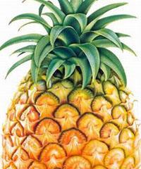 忌空腹吃菠萝会伤胃
